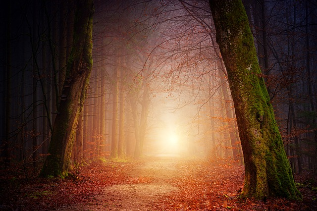 Nature Forest Light